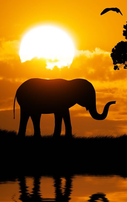 Root Chakra Animal: Elephant standing in front of orange sunset sky.