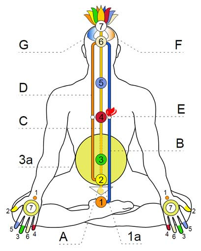 Ida, Pingala, Sushumna and Chakras Diagram