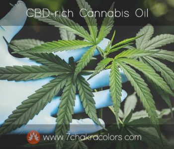 CBD-rich Cannabis Oil Production - Featured Image
